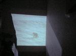 壁の映画.JPG