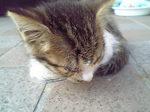 猫に額.JPG