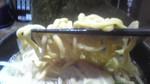 豚煮背 麺.jpg